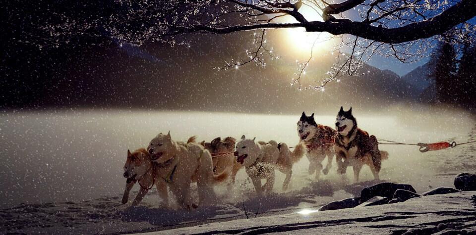 Хаски, собаки, упряжка